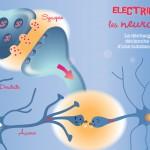 illustration-Lyon-electrique-les-neurones